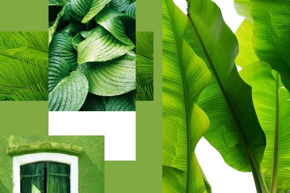 Greenery-главный цвет 2017 года
