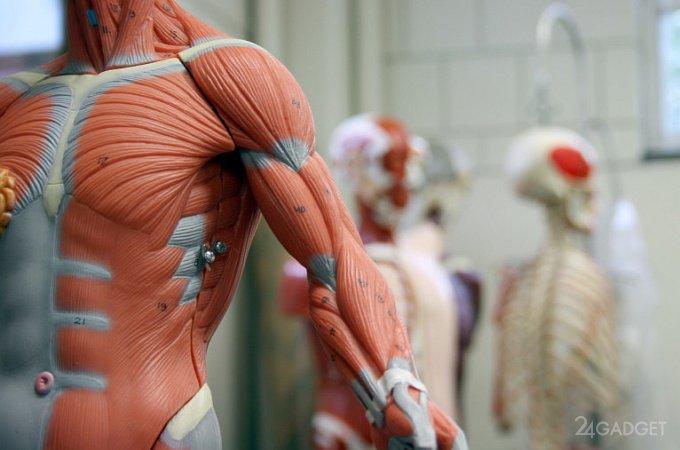 Ученые предлагают использовать роботов для выращивания биологических тканей