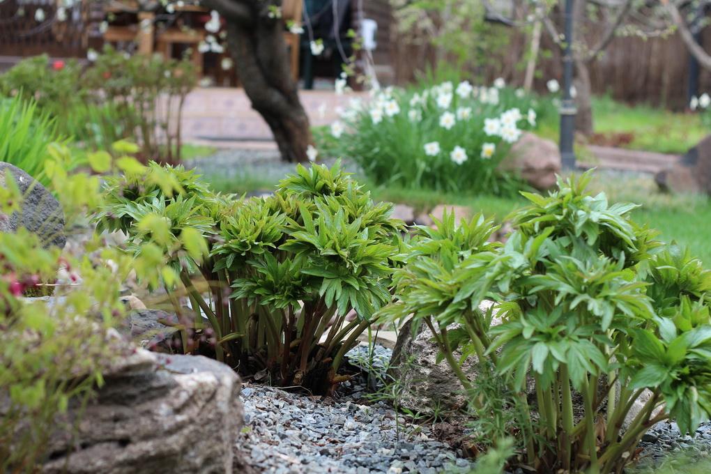 Весенний сад-как ухаживать