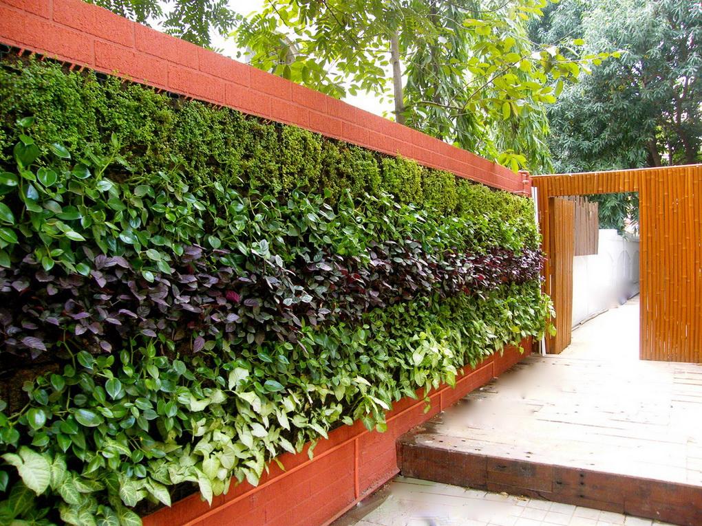 Вертикальное озеленение-идеи для сада и дачи