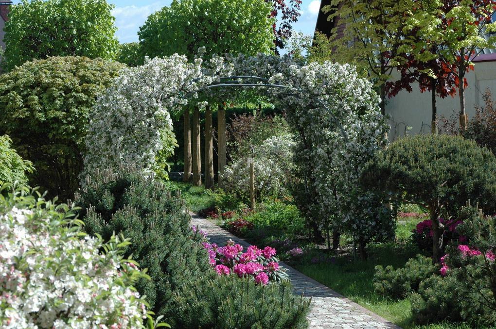 Арка в саду-вертикальное озеленение