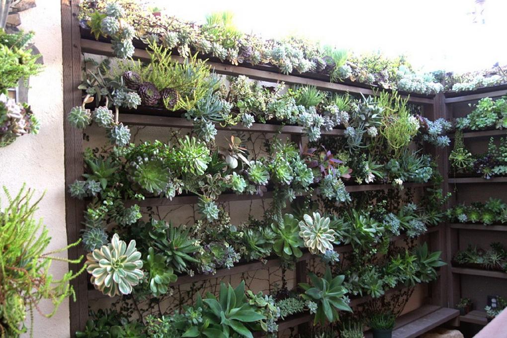 Вертикальное озеленение-суккуленты
