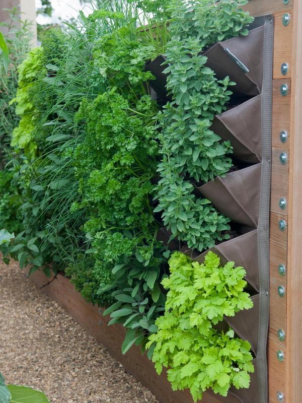 Вертикальное озеленение-варианты для маленького сада фото 1