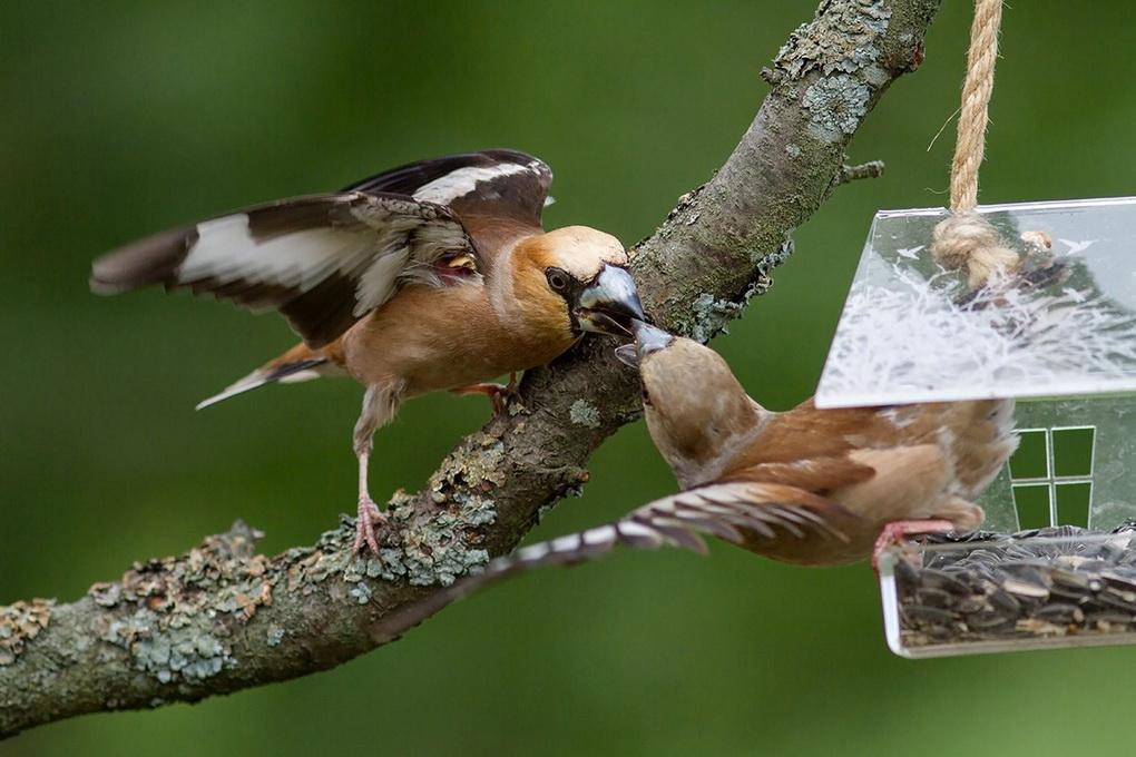Кормушки для птиц в саду-вариант 4