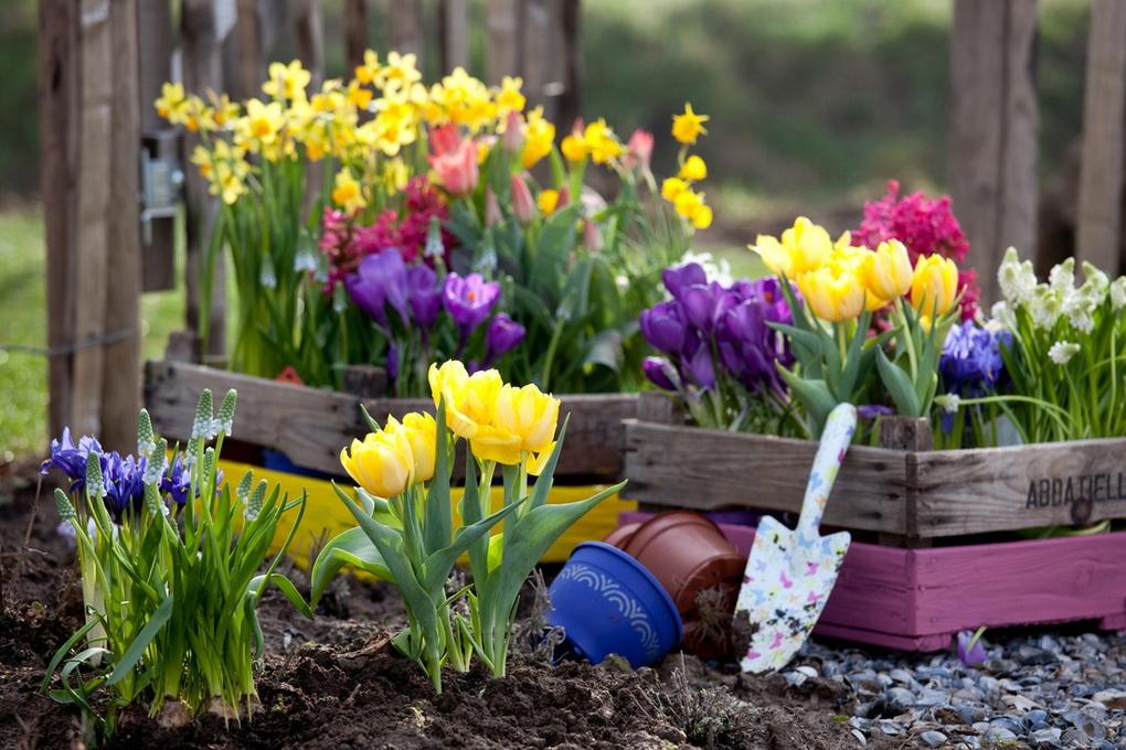 Весенние краски-первоцветы
