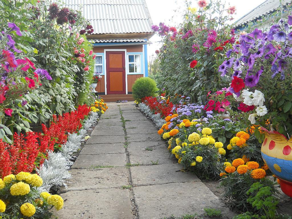 Бордюрная посадка цветов-фото
