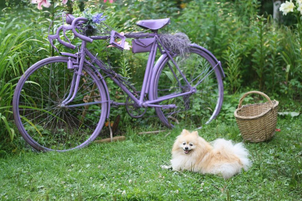 Старый велосипед-декор сада фото 4