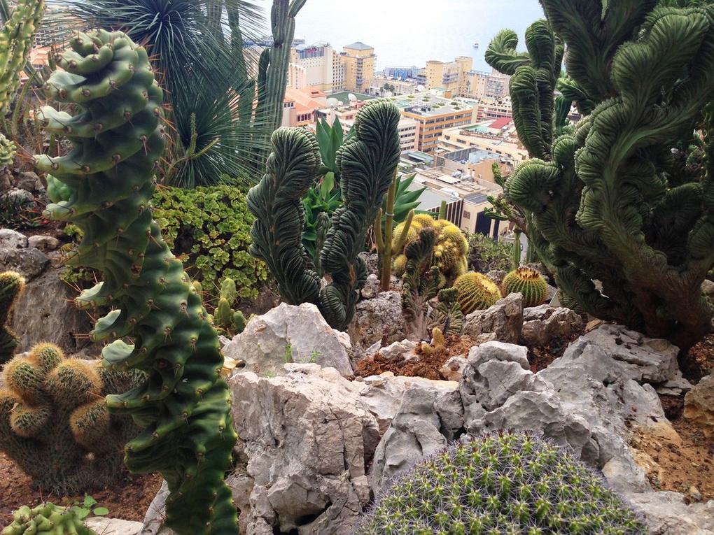Суккуленты в саду-фото 6