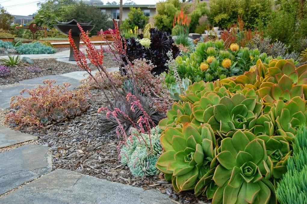 Суккуленты в саду-фото 2