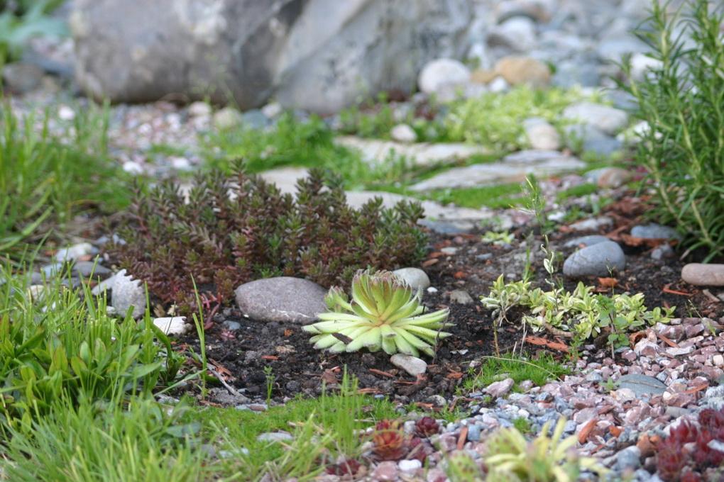 Суккуленты в саду-идеи и фото