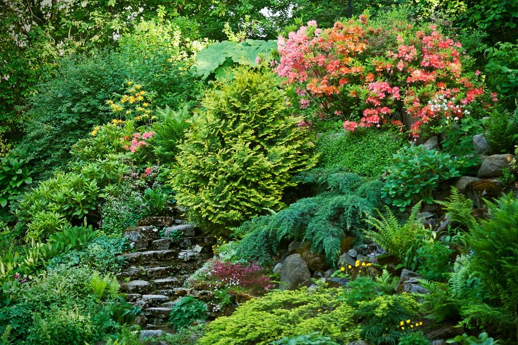 Альпийская горка с растениями-ваш сад