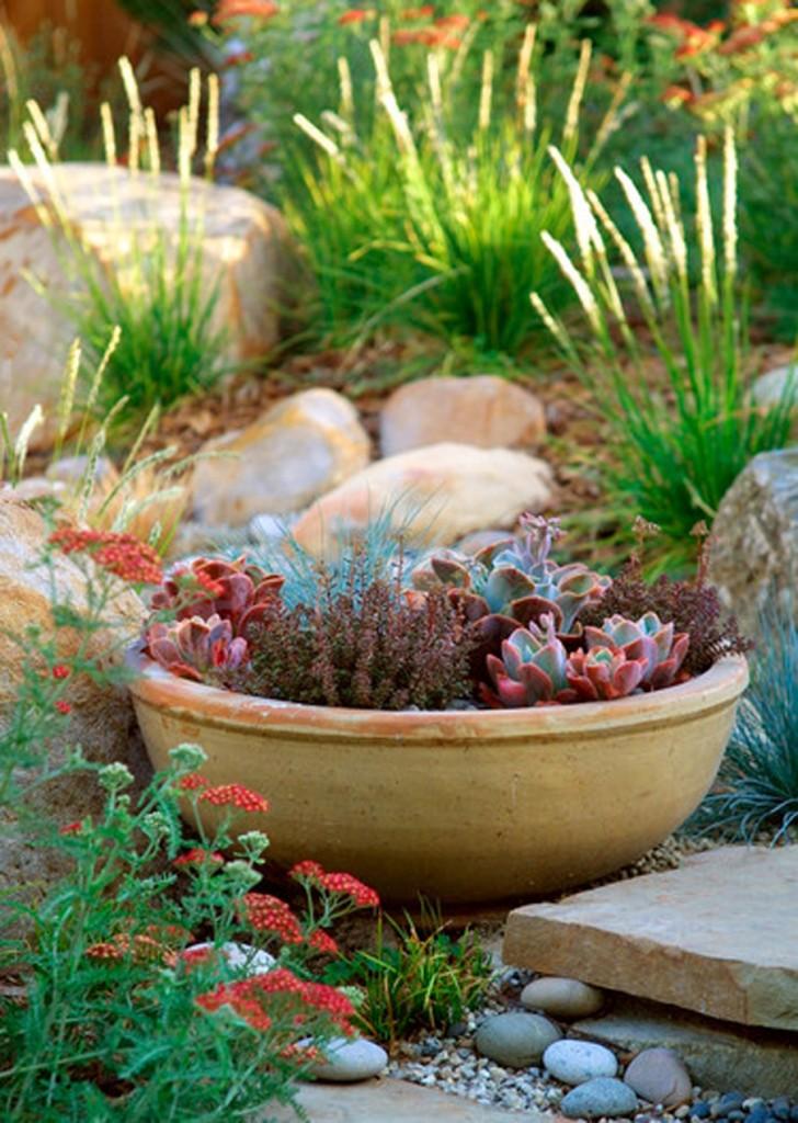 Глиняная чаша с растениями-суккуленты