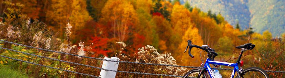Осень-виды