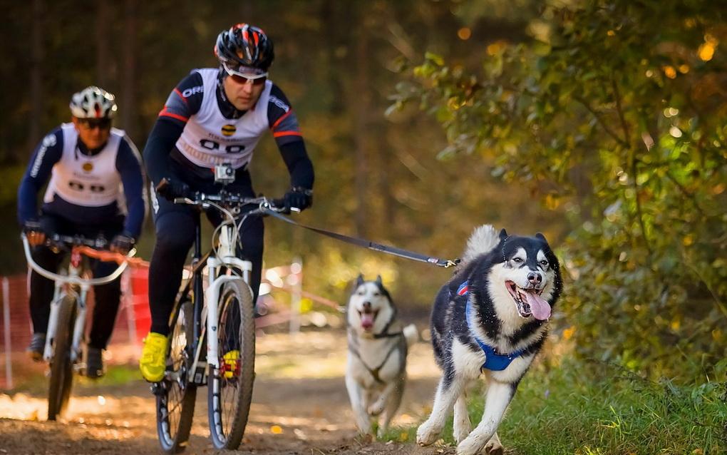 Езда на велосипеде- с собакой