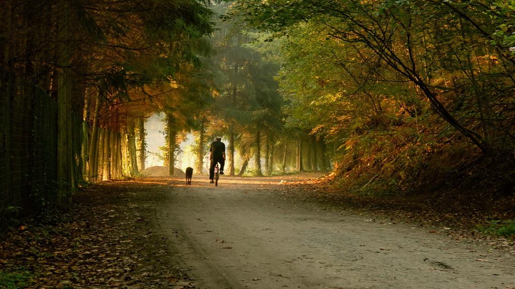 Велосипедная осень