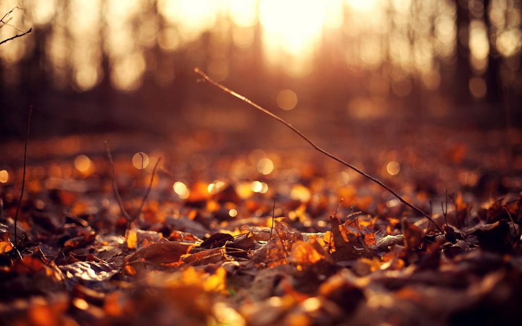 Желтые листья-осень