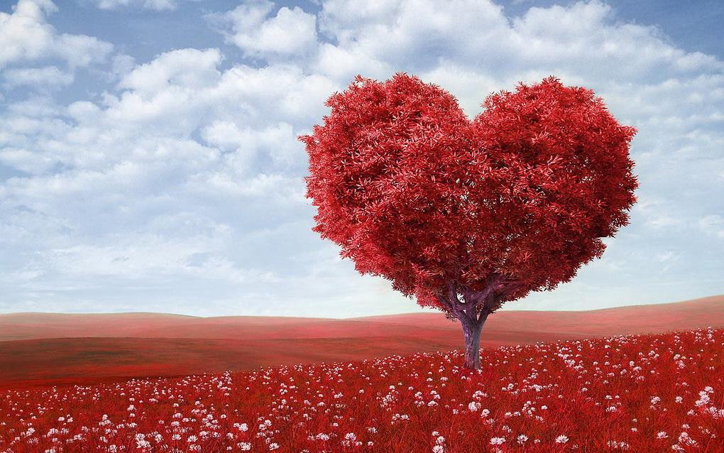 Сердце-фото