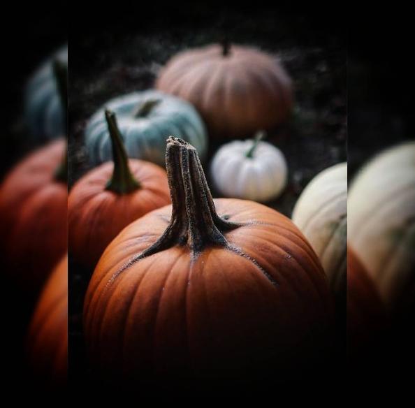 Тыквы-атрибут Хэллоуина