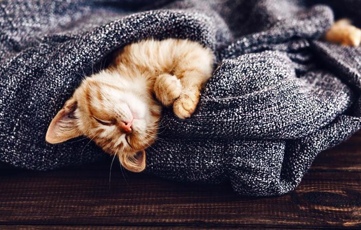 Счастье как тренд или Что такое жизнь в стиле хюгге – Рыжий кот