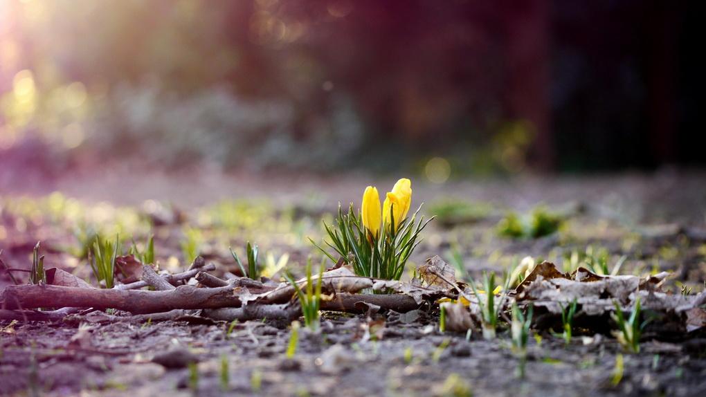 Весна-время обновлений