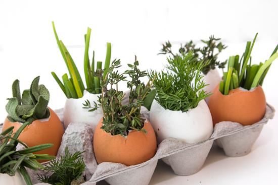Мини-вазочка для цветов из скорлупы-высадка растений