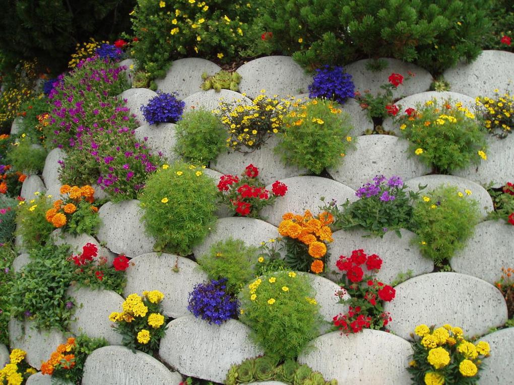 Вертикальное озеленение-идеи для сада и дачи фото