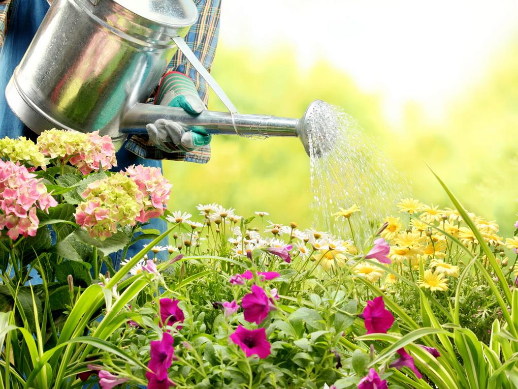 Design-perfect garden