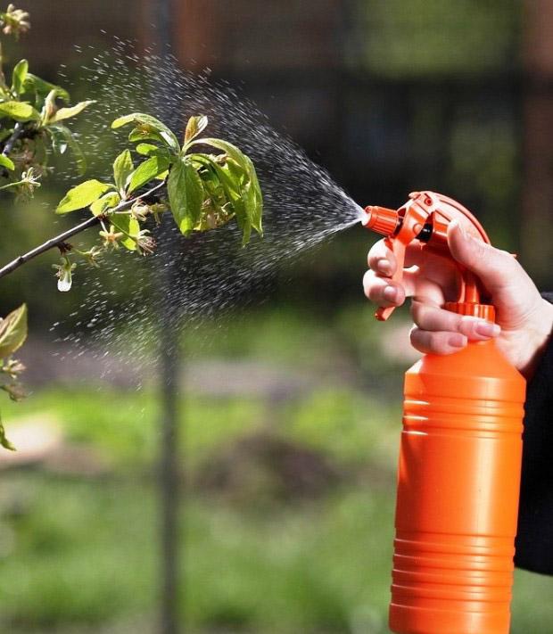 Обработка сада от вредителей-фото