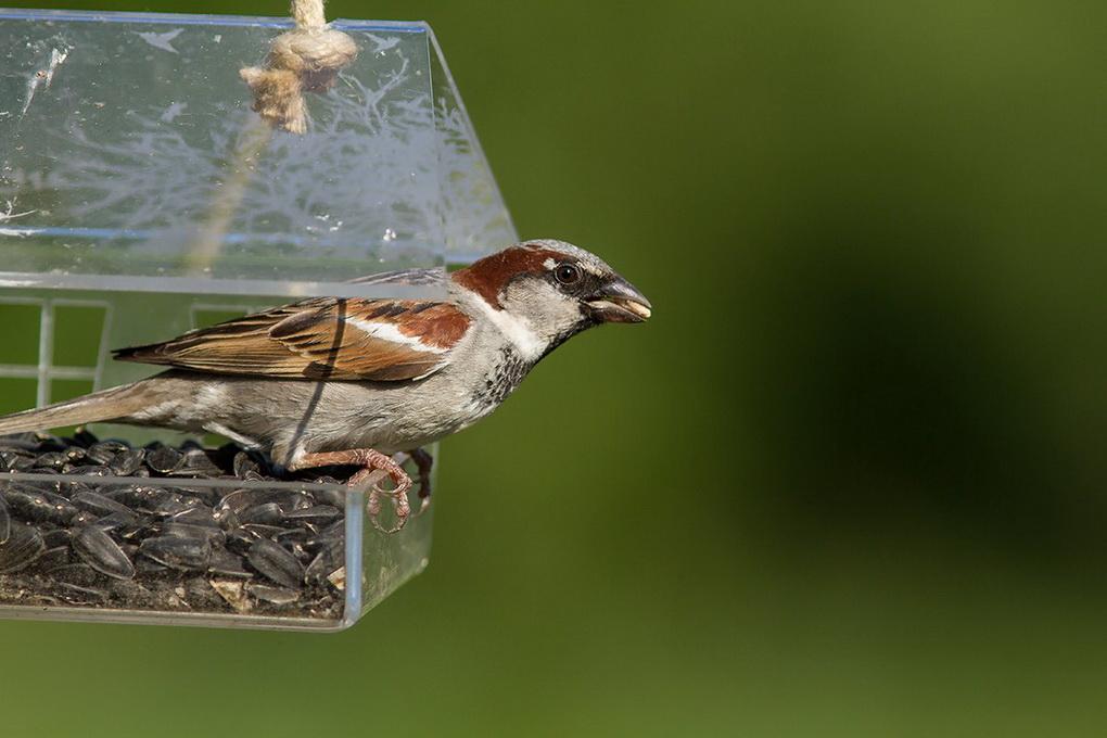 Кормушки для птиц в саду-вариант 3