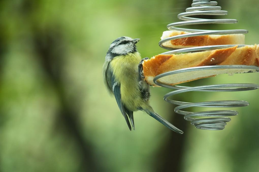 Кормушки для птиц в саду-вариант 2
