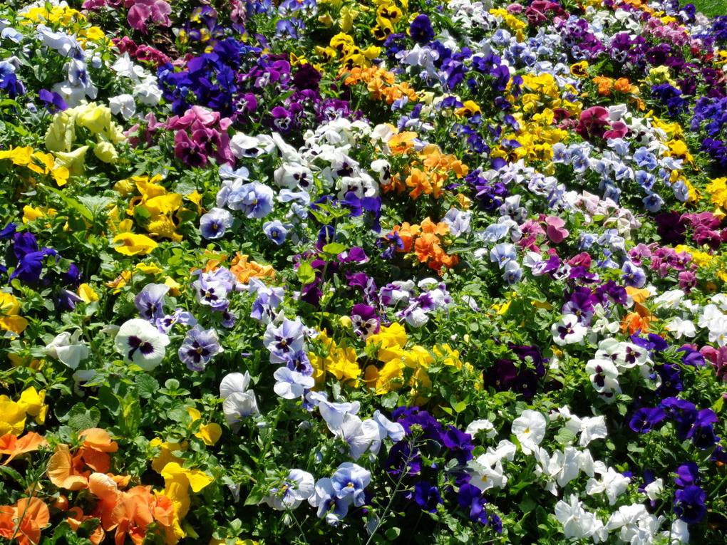 Яркий цветник-фото