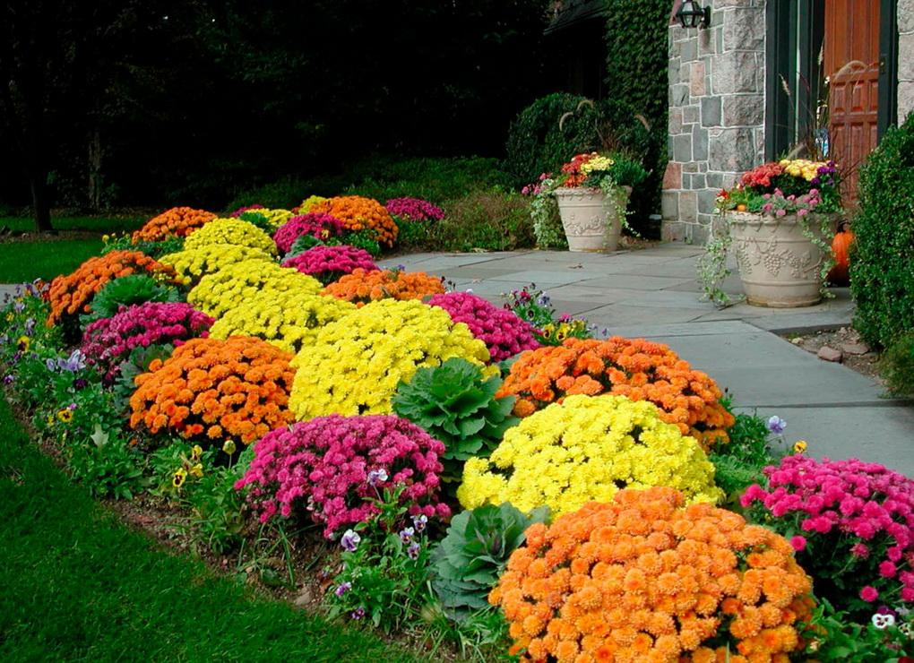 Дизайн сада-цветы