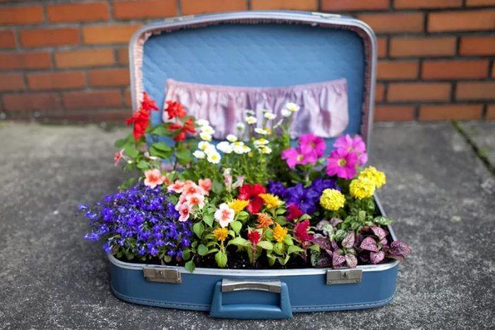 Клумба в старом чемодане-фото