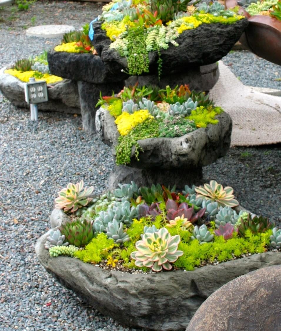 Суккуленты-мой сад как ухаживать