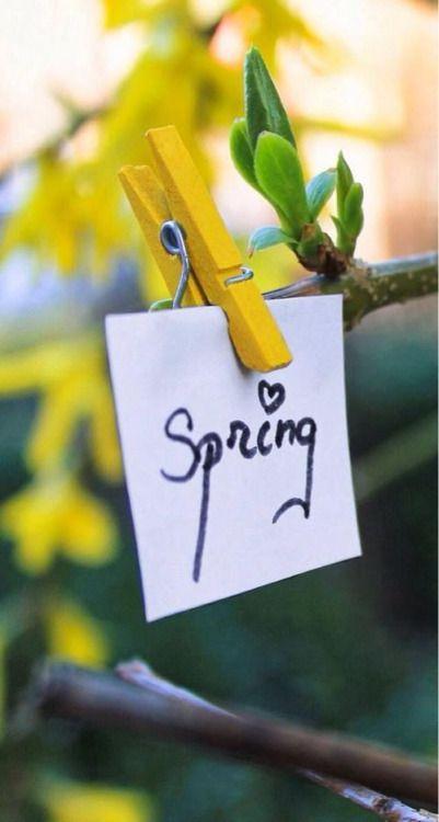 Весна в саду-фото