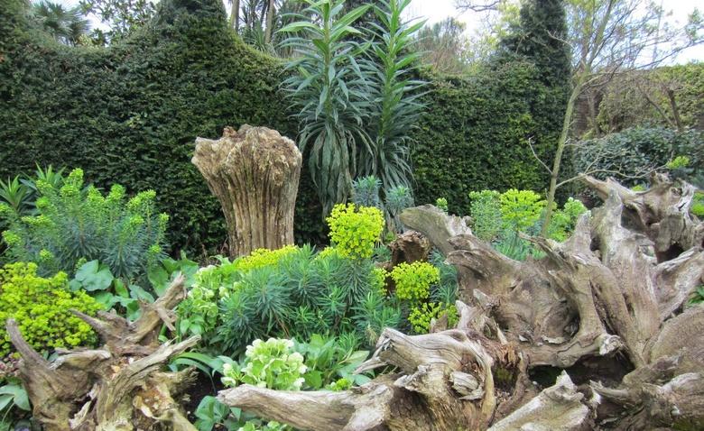 Рутарий-мой сад