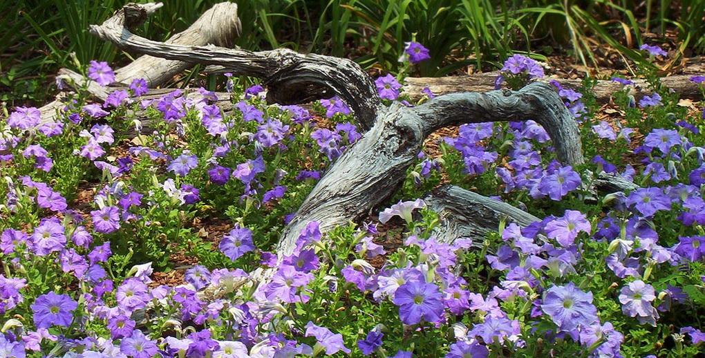 Растения для рутария-фото