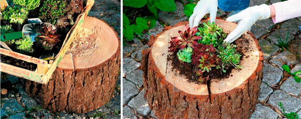 Клумба в пне-высадка растений