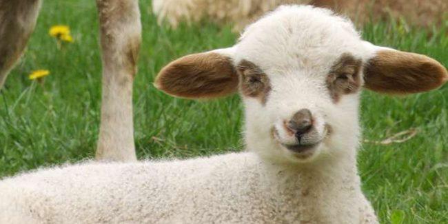 Print stem cells biorock tested on sheep