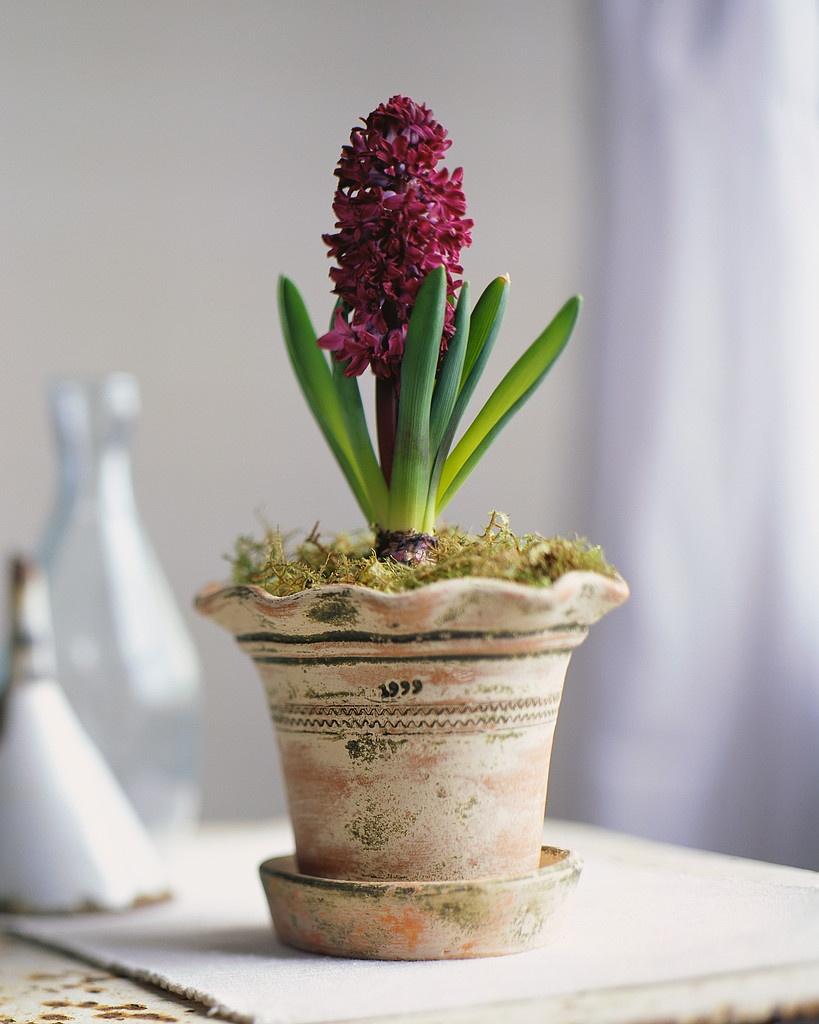 Цветы в горшках-фото 2