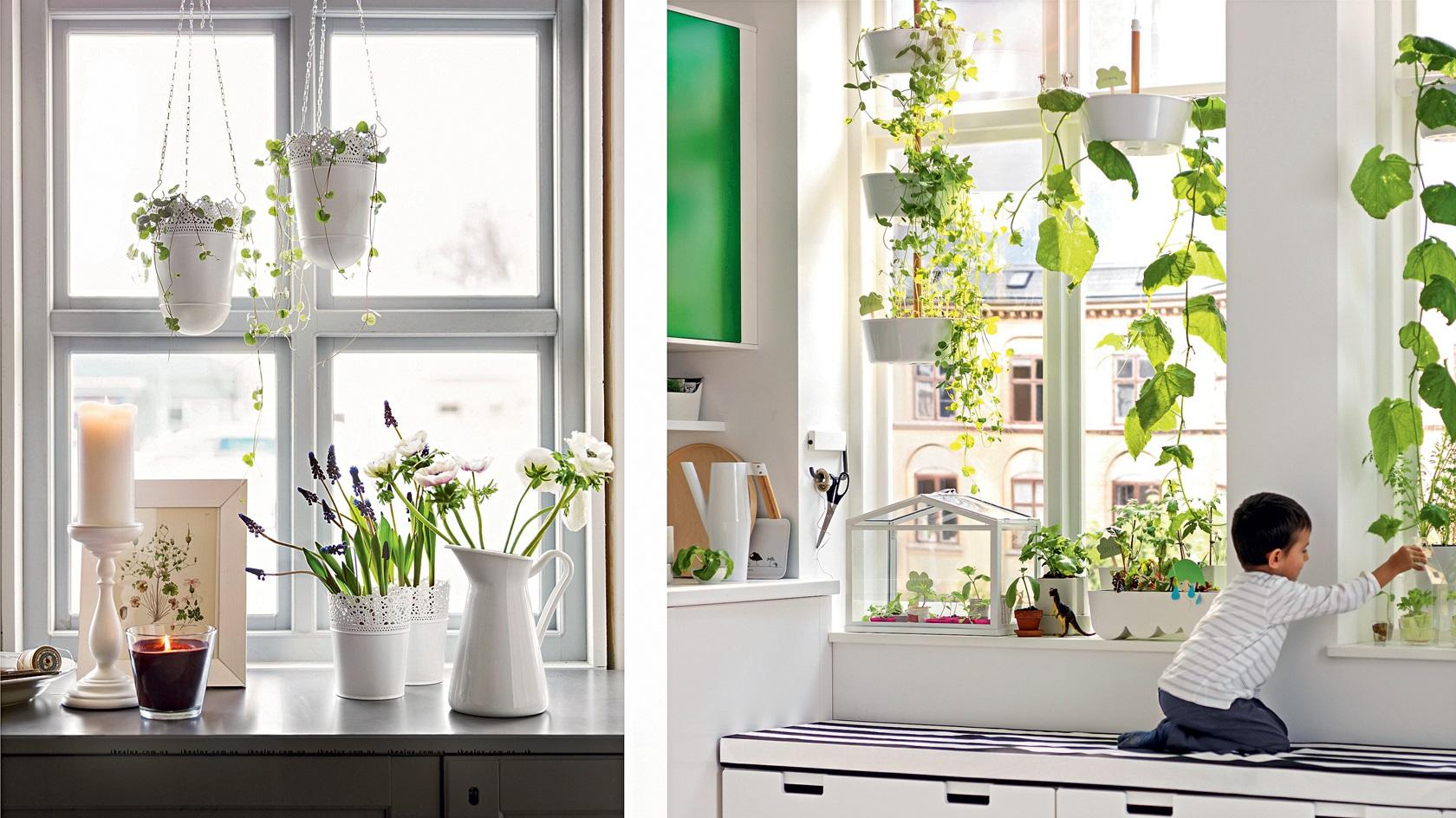 Зеленое окно-фото