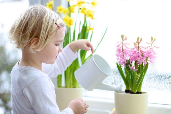 Уход за растениями в доме-фото