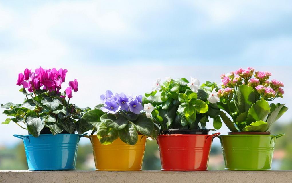 Цветы в ярких горшках-весна в доме