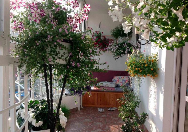 Цветочный сад-в доме