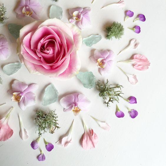 Цветы и лепестки-фото