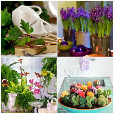 Комнатные цветы-на кухне