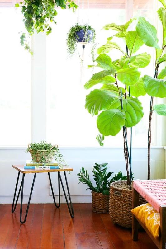 Растения для спальни-фото