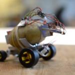 13080 In Poland, formed potato mini-robot (2 photos + video)