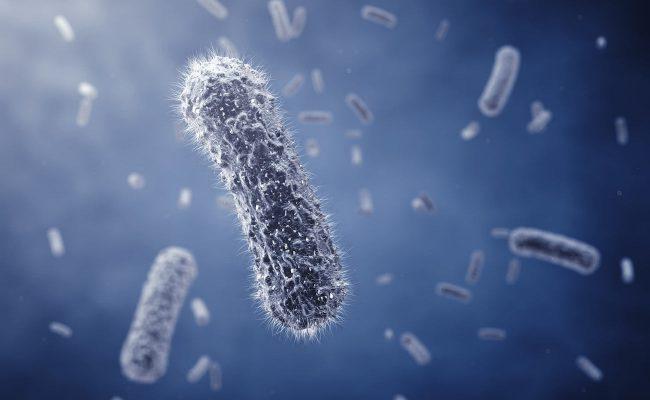 E. coli made the biocomputer