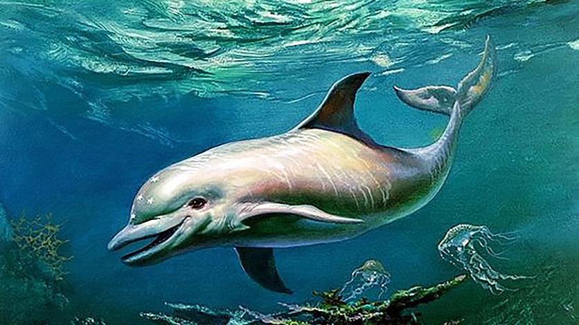 Дельфину Экко 25 лет